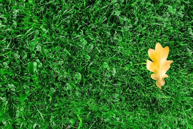 Feuille De Chêne Jaune Sur L'herbe Verte. La Feuille De Chêne Jaune Se Trouve Sur L'herbe Verte à L'automne De L'année. Fond D'herbe Verte Et Feuille De Chêne. Photo Premium