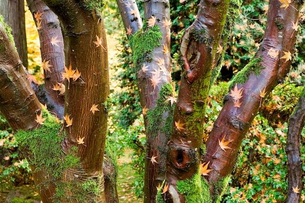 Feuille d'érable sur des troncs d'arbres Photo Premium