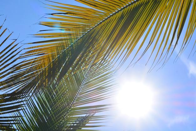 Feuille de noix de coco verte avec fond de ciel Photo Premium