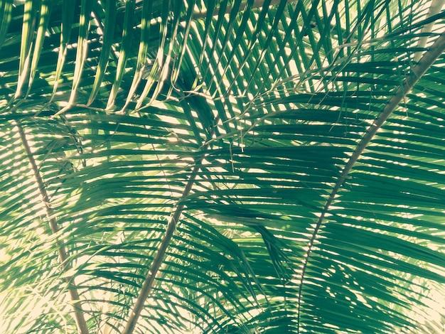 Feuille de palmier avec lumière naturelle du rayon de soleil Photo Premium
