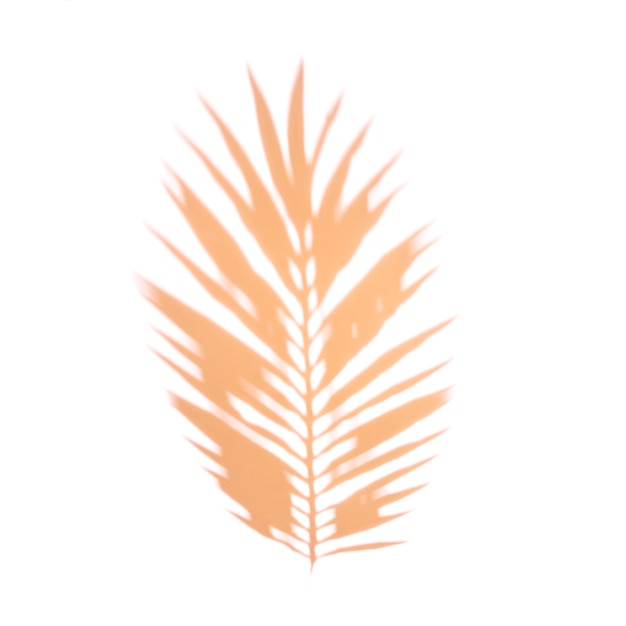 Une feuille de palmier orange sur fond blanc Photo gratuit