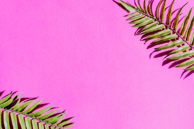 Feuille de palmier sur une surface colorée Photo gratuit