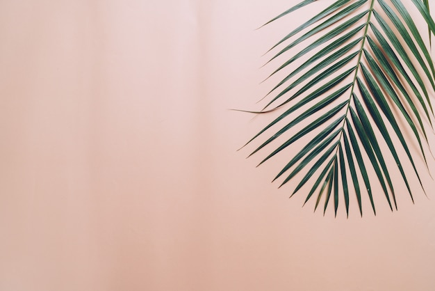 Feuille De Palmier Tropical Sur Fond De Couleur Avec Fond Photo Premium