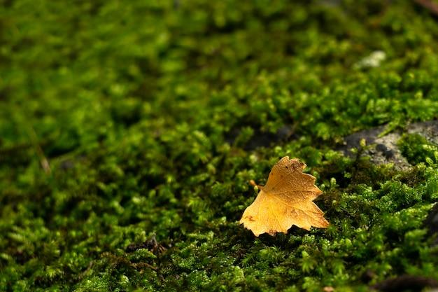 Feuille solitaire sur fond vert mousse Photo Premium