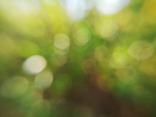 Feuille verte floue fond abstrait et bokeh de lumière du soleil blanc Photo Premium