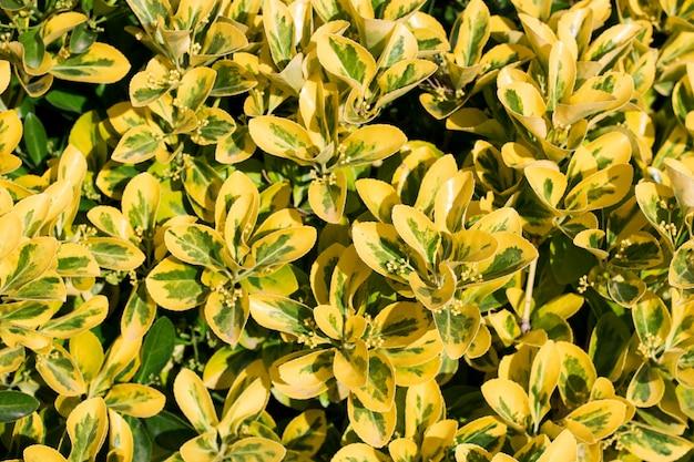 Feuille verte et jaune Photo Premium