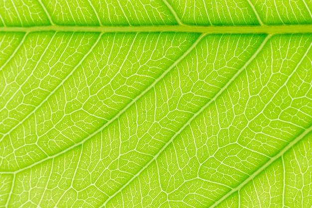 Feuille verte motif texture de fond avec la lumière derrière Photo Premium