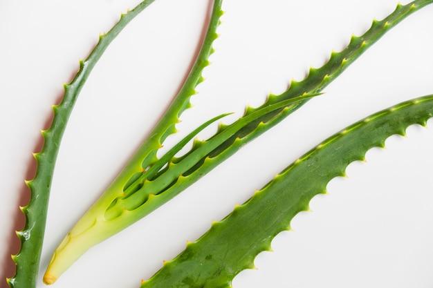 Feuilles d'aloe vera pour un traitement de beauté Photo gratuit