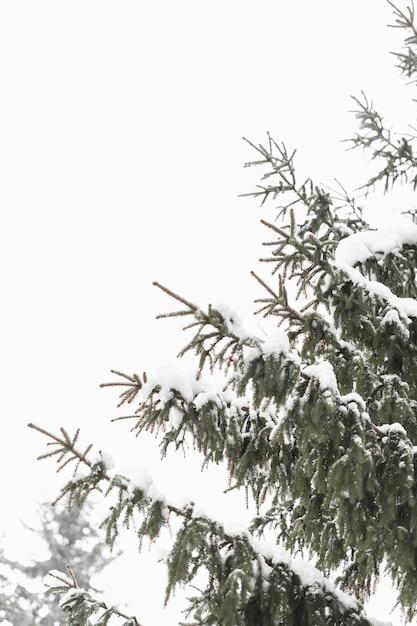Feuilles D'arbres Et Ciel D'hiver Lumière Du Jour Photo gratuit