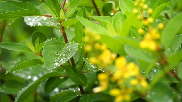 Feuilles et arbres en saison des pluies. il y a une goutte d'eau. Photo Premium