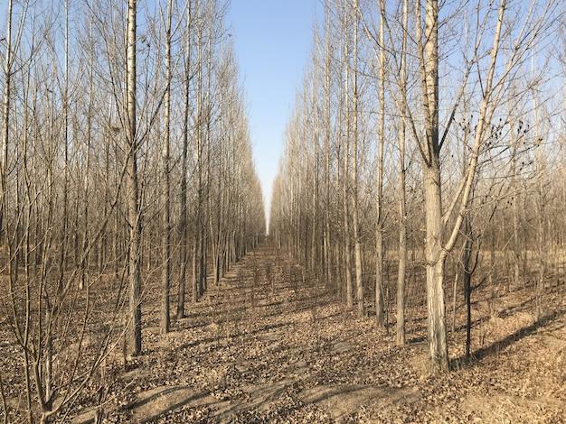 Feuilles d'automne, automne, forêt d'automne. chemin naturel vers pour fond Photo Premium