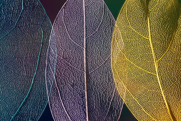 Feuilles d'automne colorées abstraites Photo gratuit