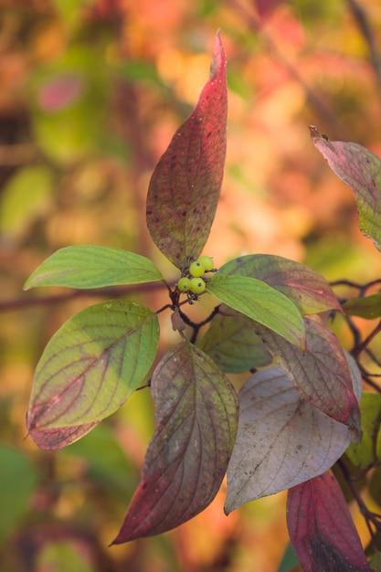 Feuilles d'automne colorées Photo Premium