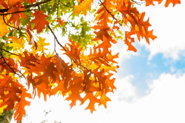 Feuilles d'automne contre le ciel bleu Photo Premium