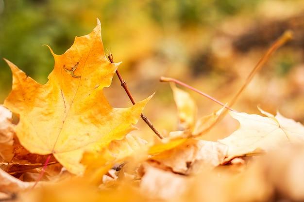 Feuilles d'automne dans le parc Photo Premium