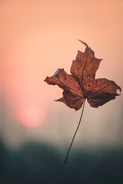 Feuilles d'automne et un livre. mise au point sélective. Photo Premium