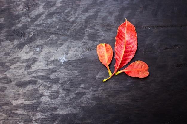 Feuilles d'automne Photo Premium