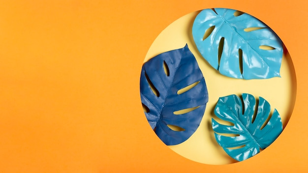 Feuilles bleues dans le cadre avec espace de copie Photo gratuit