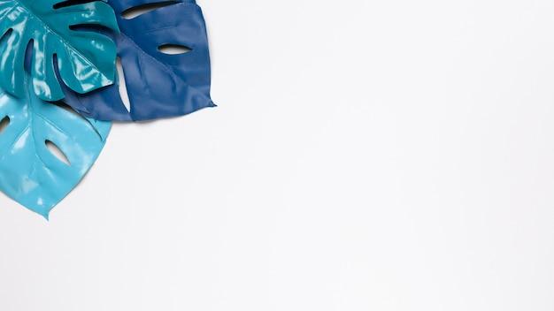 Feuilles bleues sur fond blanc avec espace de copie Photo gratuit