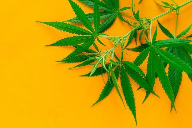 Feuilles de cannabis vertes sur fond jaune vif, concept de médecine alternative et légalisation Photo Premium