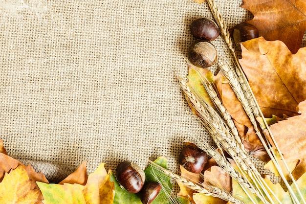 Feuilles d'érable automne et châtaignes gisant sur un brun. Photo Premium