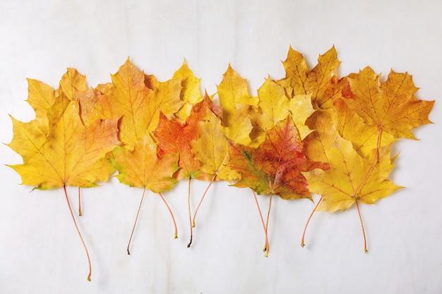 Feuilles d'érable automne jaune Photo Premium
