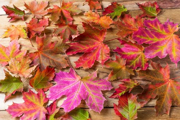 Feuilles d'érable colorées Photo Premium
