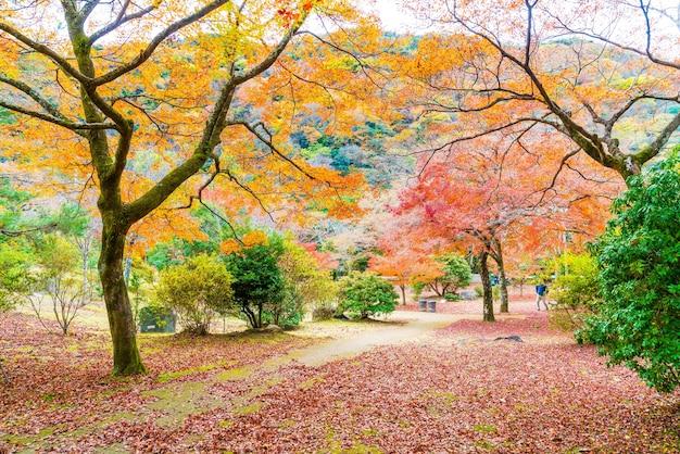 Feuilles d'érable rouge en fleurs à arashiyama Photo Premium