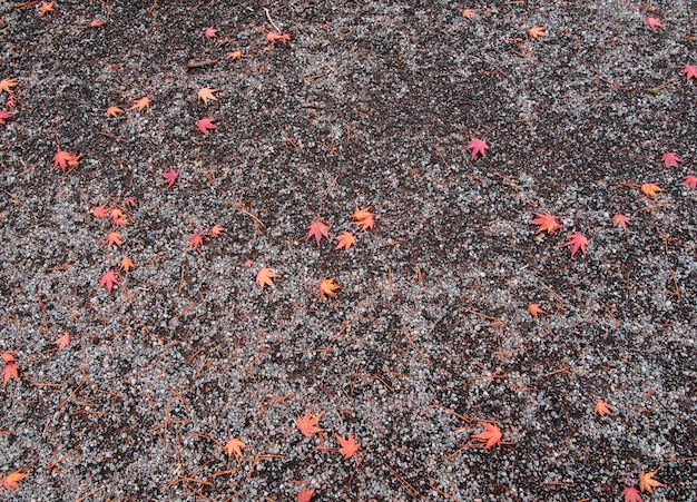 Feuilles d'érable rouge sur le sol à l'automne au japon Photo Premium