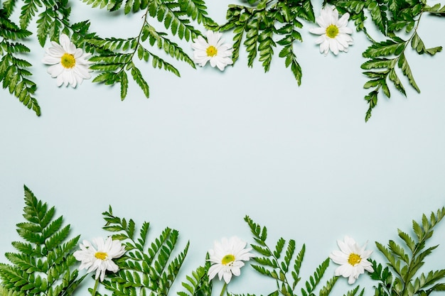 Feuilles et fleurs sur fond bleu clair Photo gratuit