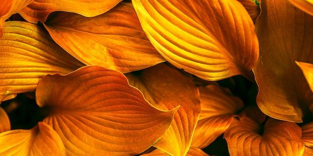 Feuilles de fond toniques à la couleur orange. Photo Premium