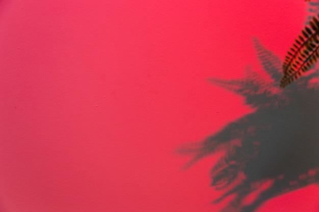 Feuilles de fougère sur fond rose Photo gratuit