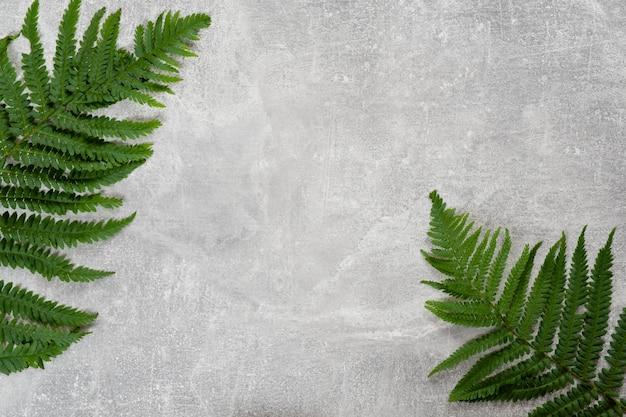 Les feuilles de fougère à plat reposent sur fond de béton Photo Premium