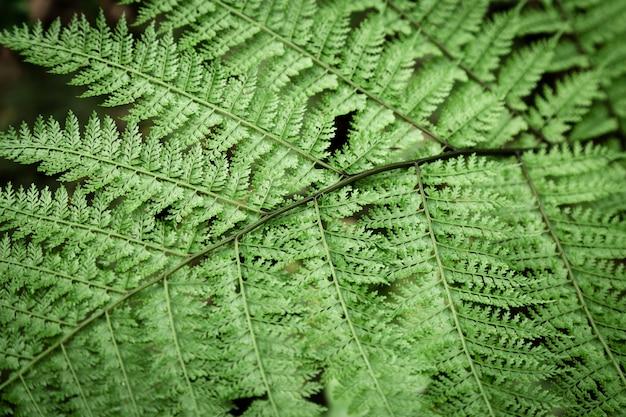 Feuilles de fougère tropicale Photo gratuit