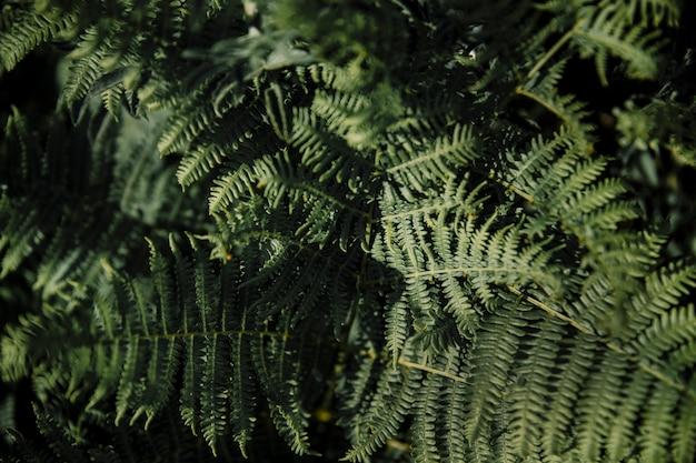 Feuilles de fougère verte luxuriante Photo gratuit