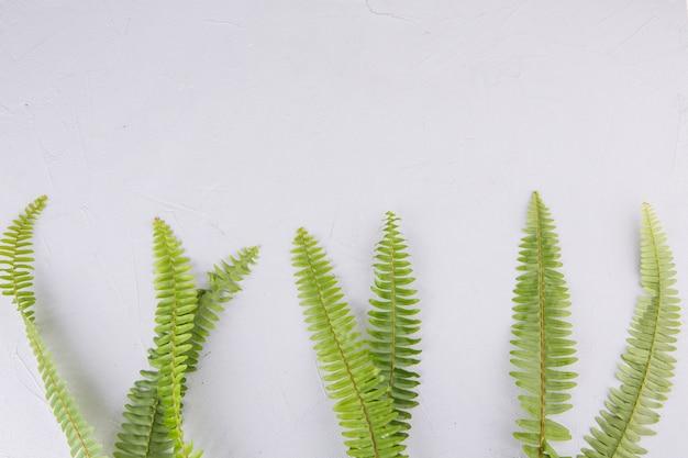 Feuilles de fougère verte sur la table lumineuse Photo gratuit