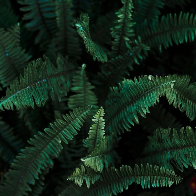 De feuilles de fougère Photo gratuit