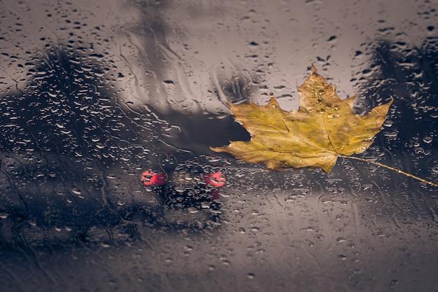 Feuilles jaunes tombées et gouttes de pluie Photo Premium