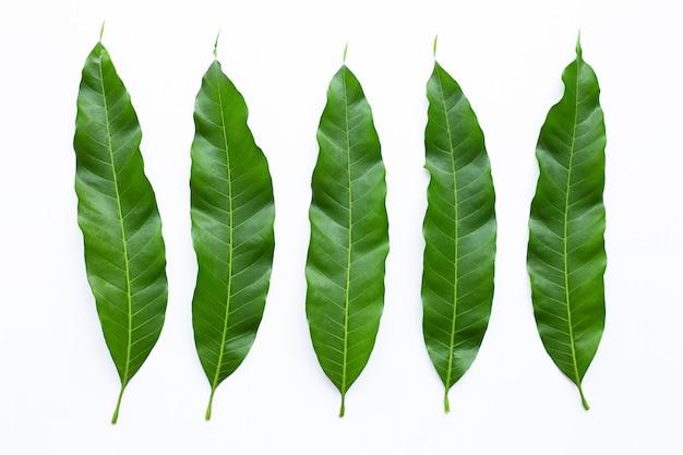 Feuilles de mangue sur fond blanc. Photo Premium