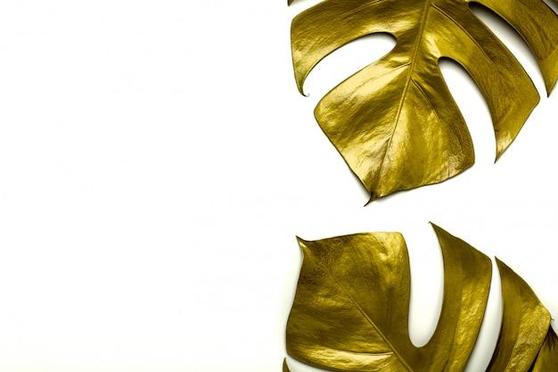 Feuilles de miltiple doré monstera isolés sur fond blanc Photo Premium