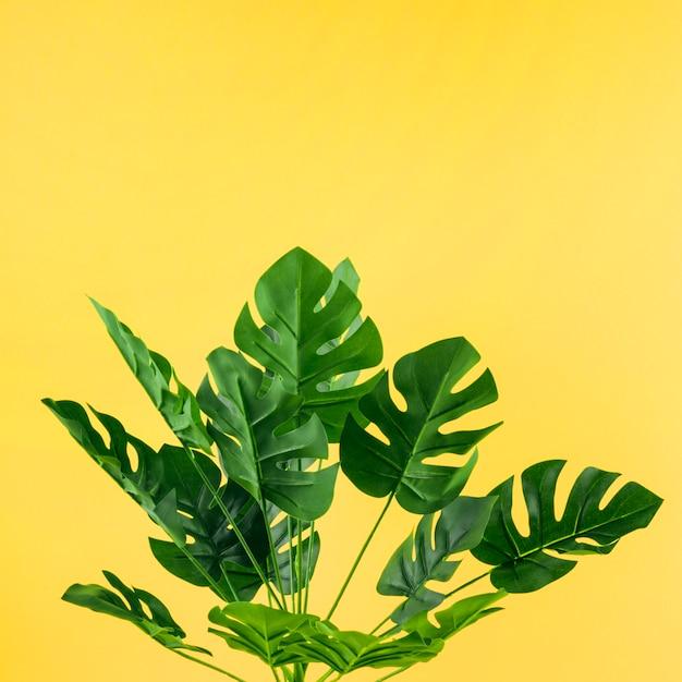 Feuilles de monstera artificielles sur fond jaune Photo gratuit