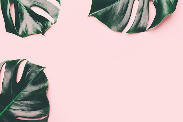 Feuilles de monstera vert sur rose Photo gratuit