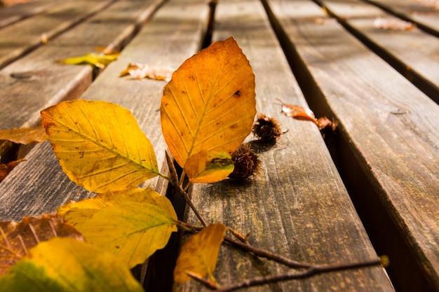 Feuilles mortes sur le banc. fond d'automne et d'automne. feuillage dans le parc national de monti simbruini, latium, italie. Photo Premium