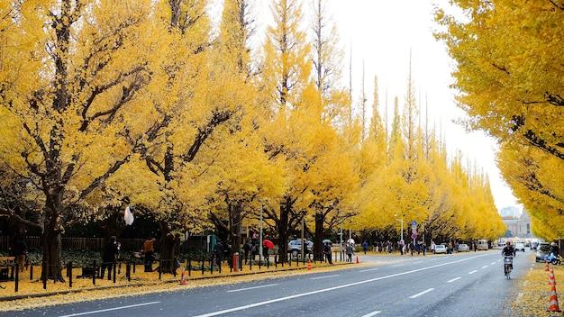 Feuilles d'or à l'université de tokyo, saison d'automne à tokyo Photo Premium
