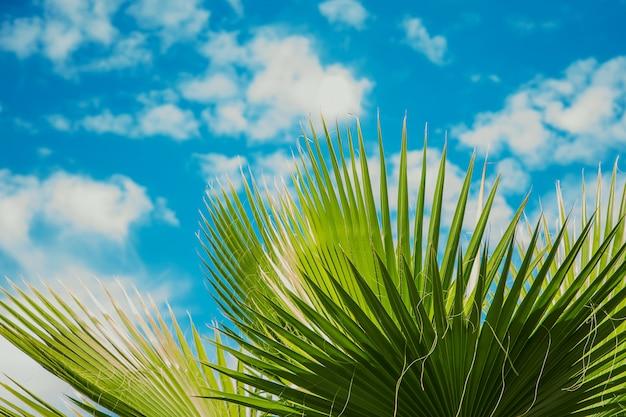 Feuilles de palmier contre le ciel. mise au point sélective. Photo Premium