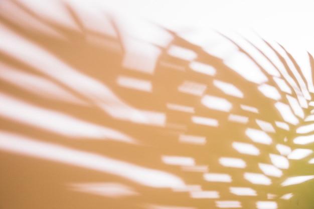 Feuilles de palmier défocalisées sur fond blanc Photo gratuit