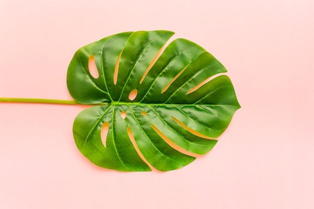 Feuilles de palmier monstera tropicales Photo gratuit