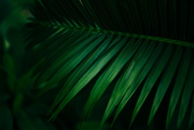 Feuilles de palmier naturel vert - belle feuille dans la jungle de la forêt tropicale Photo Premium