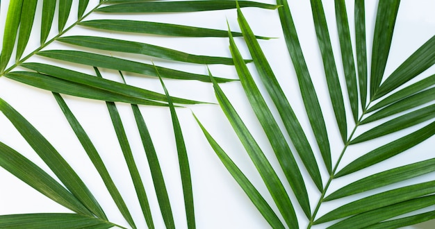 Feuilles De Palmier Tropical Sur Blanc. Photo Premium