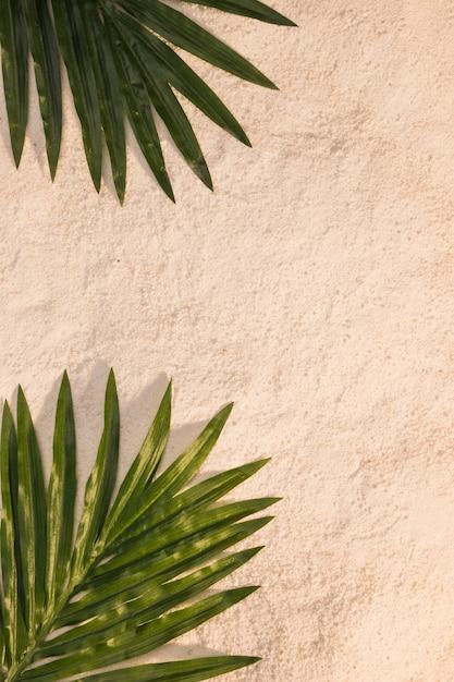 Feuilles de palmier tropical sur la plage Photo gratuit